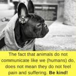 Be kind to animals. Izey Victoria Odiase