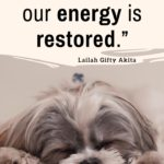 11 Quotes on Rest and Relaxation